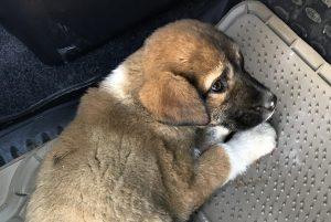Астраханцы спасли безнадежного щенка