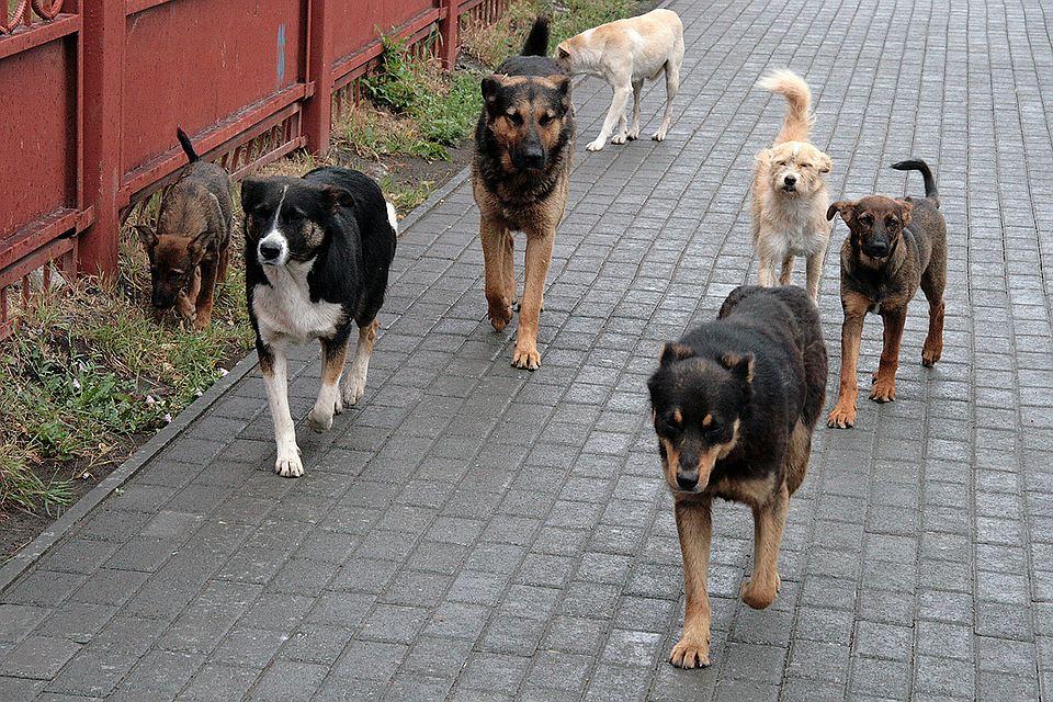 собаки в Астрахани