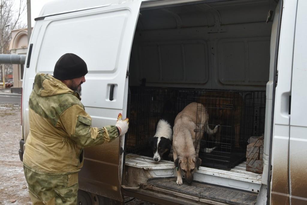 В Астрахани в частном приюте для собак появилась первая сотня «квартирантов»