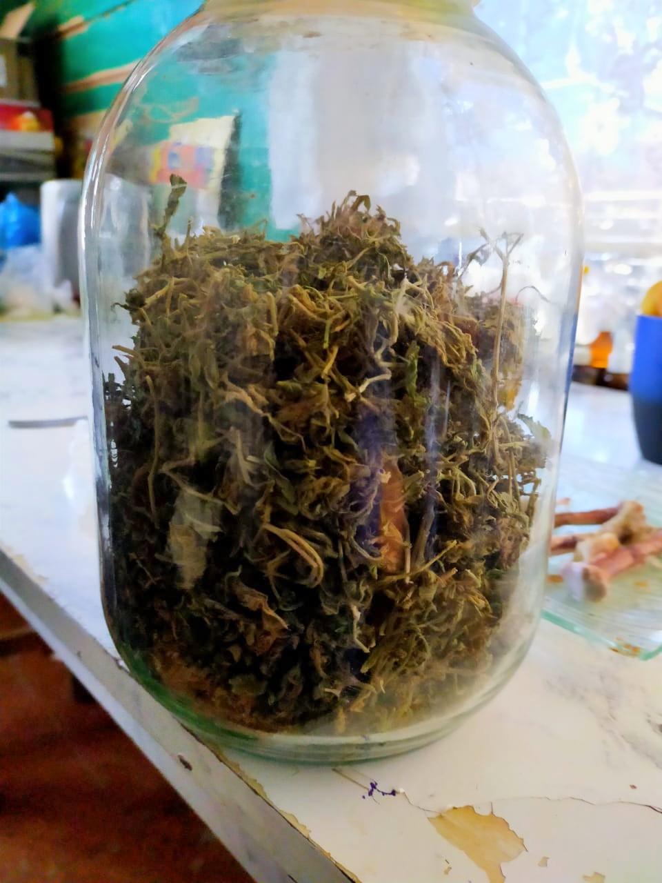 марихуана Астраханец «изобрел» рецепт лечения марихуаной