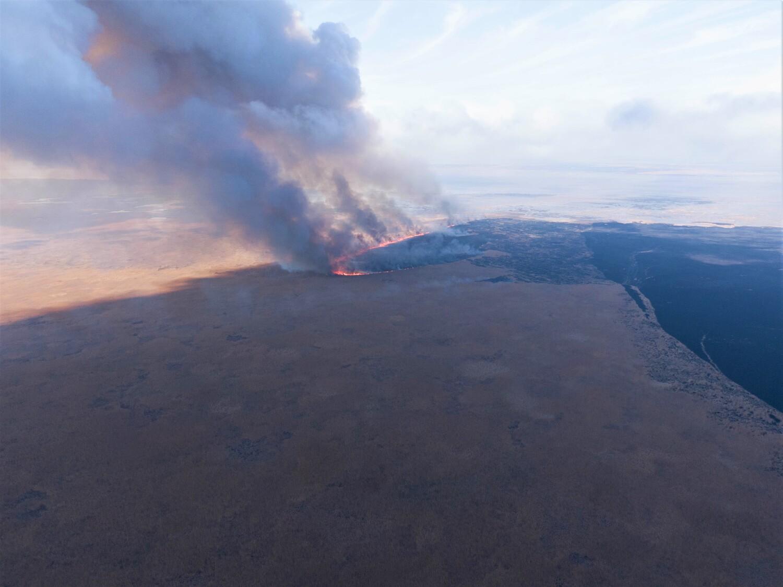 тростник 2 Природные пожары в астраханском биосферном заповеднике удалось ликвидировать лишь через 10 дней