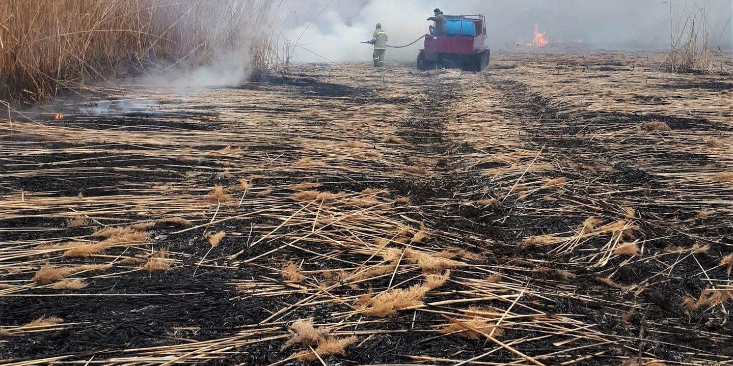 тростник Природные пожары в астраханском биосферном заповеднике удалось ликвидировать лишь через 10 дней
