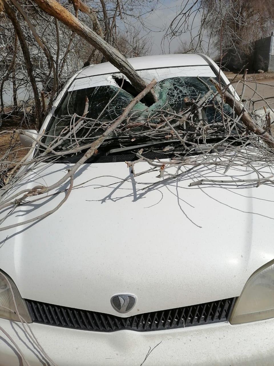 и авто 2 В Астрахани сухое дерево пронзило припаркованный автомобиль
