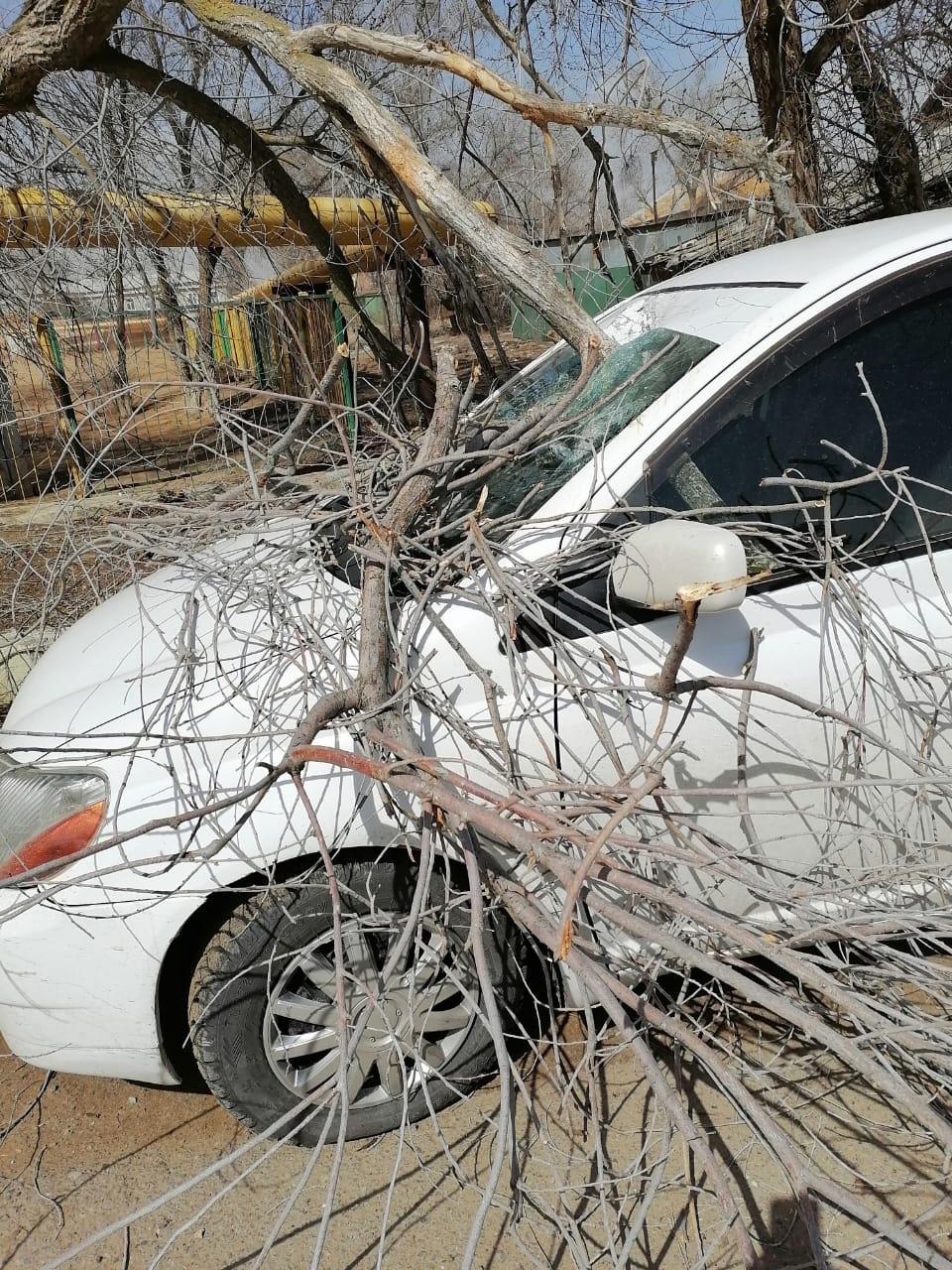 и авто 3 В Астрахани сухое дерево пронзило припаркованный автомобиль