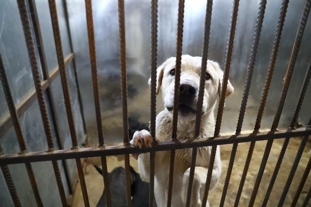 отлов бродячих собак в Астрахани