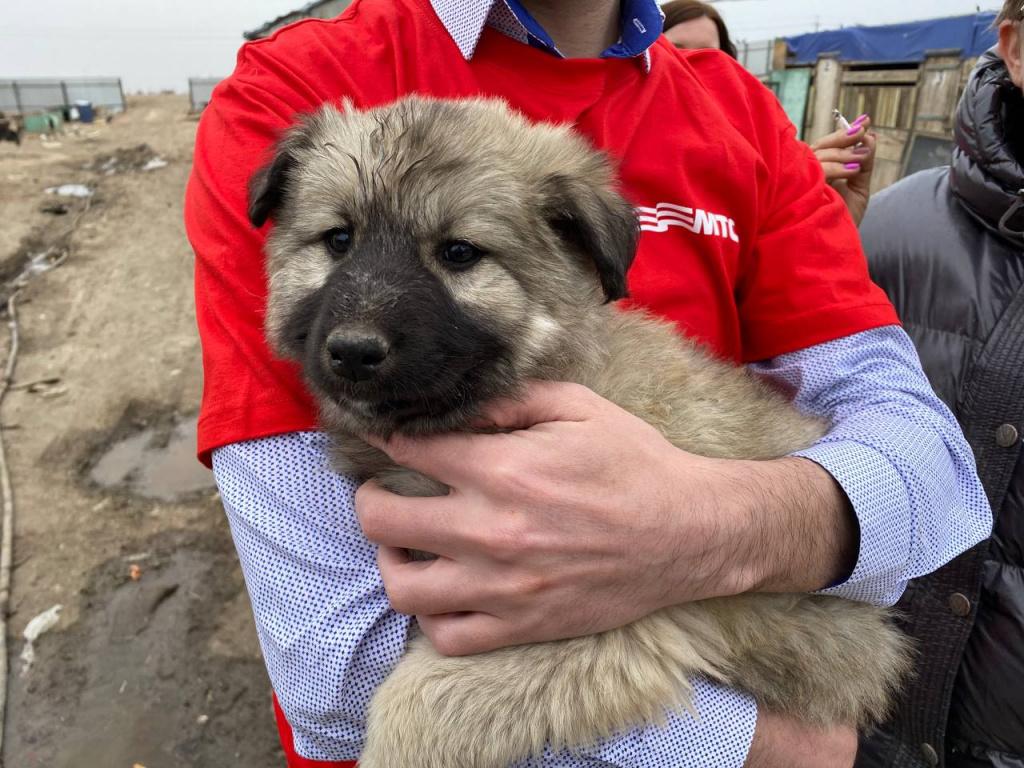 приют 1 Собак-потеряшек в Астрахани может найти искусственный интеллект