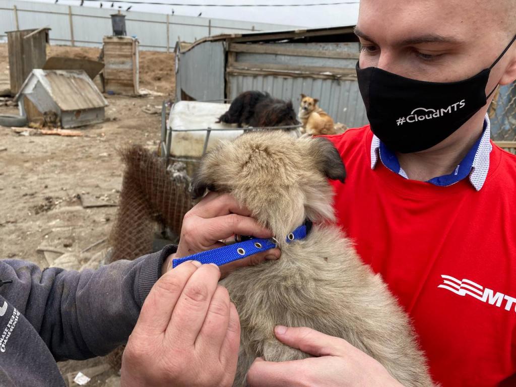 приют 2 Собак-потеряшек в Астрахани может найти искусственный интеллект