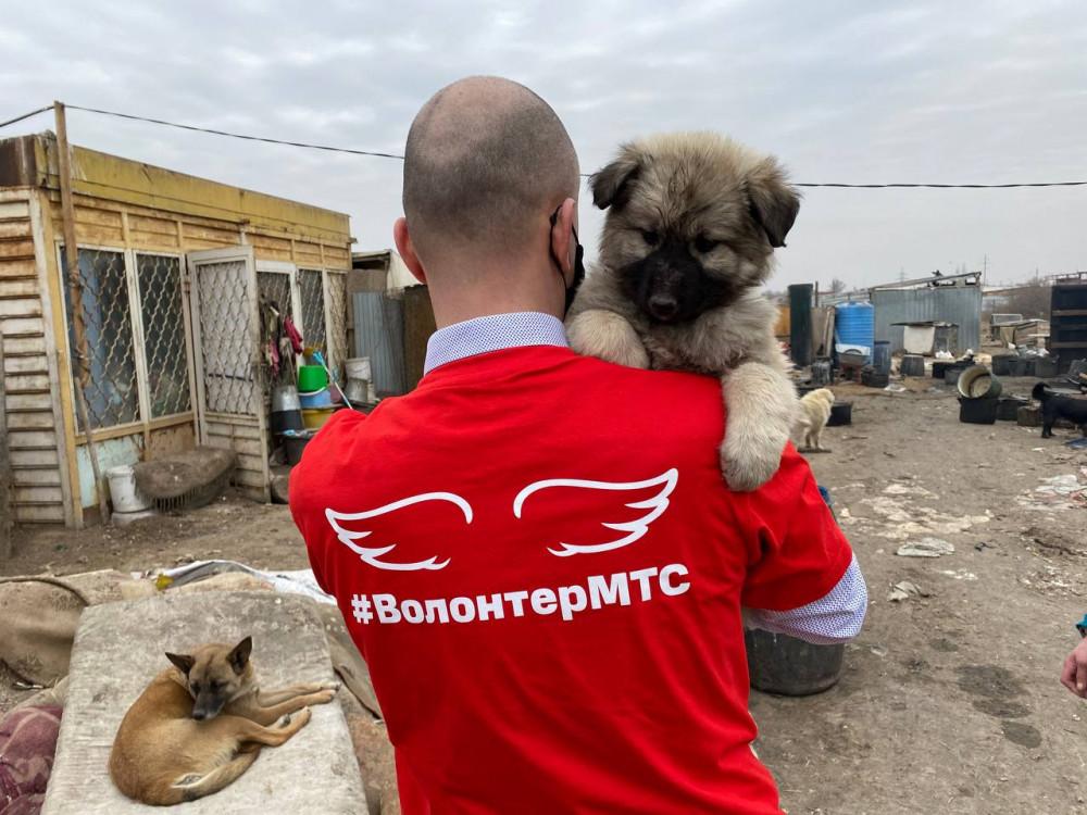 приют 3 Собак-потеряшек в Астрахани может найти искусственный интеллект
