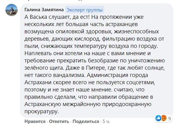 """4 В Астрахани с подачи магазина срубили """"сорящий"""" семенами вяз"""
