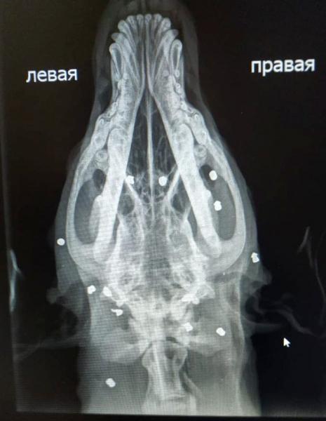 1 Под Астраханью пенсионеры-садисты расстреляли собаку