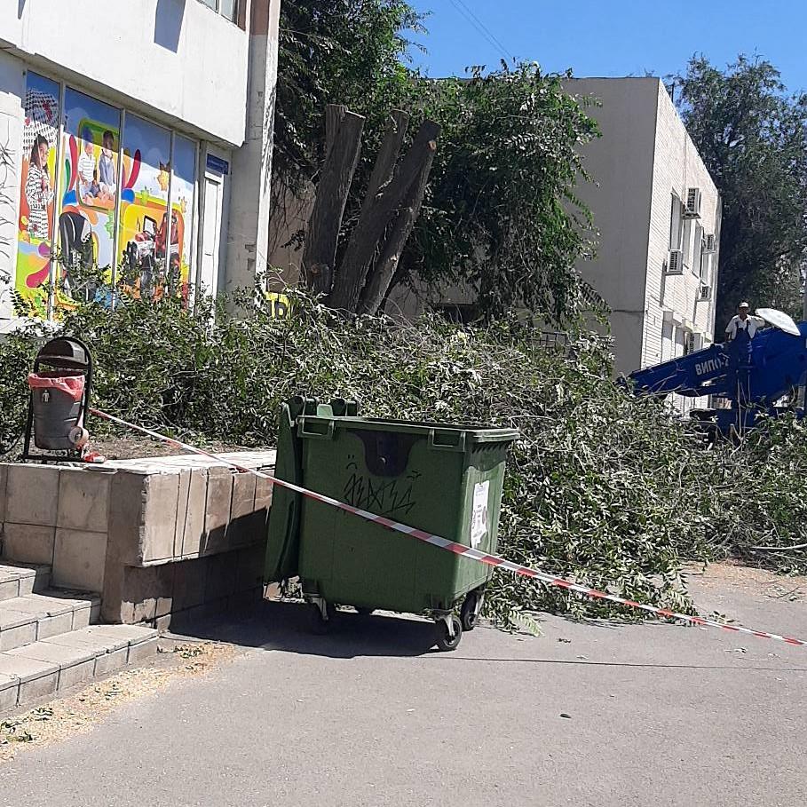 """дерева 1 В Астрахани с подачи магазина срубили """"сорящий"""" семенами вяз"""