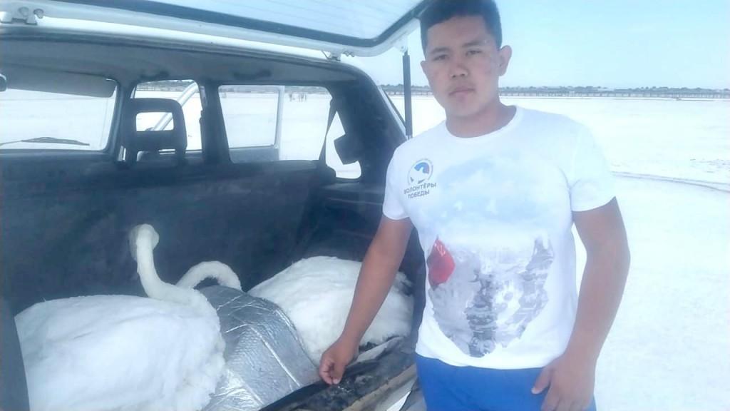 На озере Баскунчак спасли лебедей. Фото: astrobl.ru