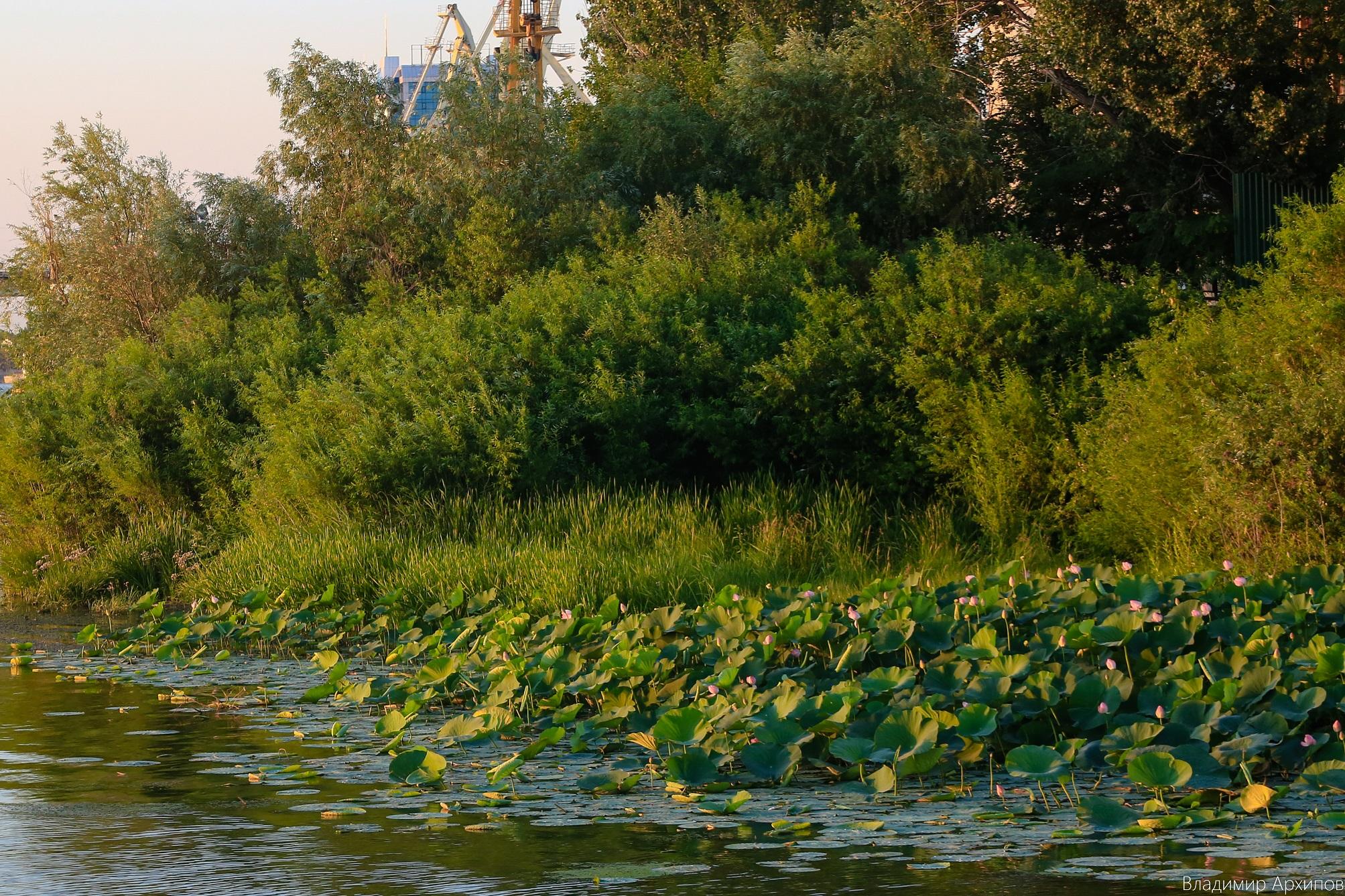 5W4A0017 5 Лучшее место для фотосессии в Астрахани